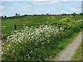 TM4488 : Pastures beside the path to Cucumber Lane by Evelyn Simak