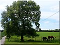 TL3430 : Grazing horses near to Middle Farm by Bikeboy