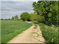 TL8525 : Bridleway on farm track, near Witch Wood, Coggeshall  by Roger Jones