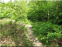 TQ2282 : Path into woodland, Wormwood Scrubs by David Hawgood
