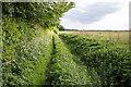 TL5563 : Footpath to Gutter Bridge by David P Howard