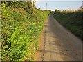 SX2957 : Lane to Trelowia by Derek Harper