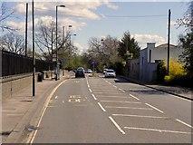 TQ1469 : A308 Hampton Court Road, Bushy Park by David Dixon