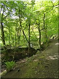 SX6094 : Ball Hill footpath, part of the Tarka Trail, Okehampton by David Smith