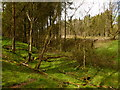 NY6616 : Stream valley in Hoff Lunn by David Medcalf