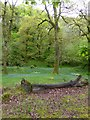 SX6093 : Bluebells and ramsons in Halstock Wood by David Smith