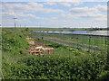 TL3543 : Turnpike Nursery by Hugh Venables