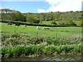 ST7864 : Cattle pasture, below Hengrove Wood by Christine Johnstone
