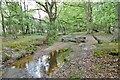 SU3602 : Stubbs Wood, Worts Gutter by Mike Faherty