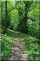 SO3608 : Woodland path, Clytha by Philip Halling