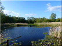 ST4286 : Lake seen from bird watching hide, Magor Marshes Nature Reserve by Ruth Sharville