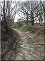 TM4673 : Sandlings Walk by Keith Evans