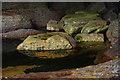 NG5112 : Rock-pool by Ian Taylor