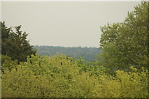 TQ3370 : View of the southeast from the Crystal Palace terrace #10 by Robert Lamb