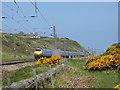NT9658 : East Coast Main Line below Lamberton Shiels by Oliver Dixon