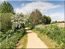 TL8663 : Footpath beside the River Lark by David P Howard