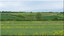 TL9648 : Looking to paddocks over oilseed rape, Monks Eleigh by Roger Jones