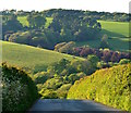 SX3654 : The hill of Sheviock Lane, Crafthole, Cornwall by Edmund Shaw