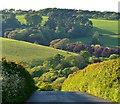 SX3654 : The hill of Sheviock Lane, Crafthole, Cornwall by Edmund Shaw