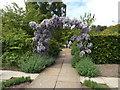 SJ3075 : Wisteria arch, Ness Botanic Garden by Richard Hoare