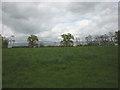 NY6123 : Pastureland by Crossrigg Farm by Karl and Ali