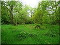 SE1328 : Grassy glade in Jagger Park Wood, North Bierley by Humphrey Bolton