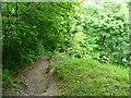 SE1328 : Path in Jagger Park Wood, North Bierley by Humphrey Bolton