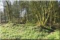 ST2213 : Ander's Lane Farm by Richard Webb