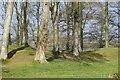 ST2214 : Robin Hood's Butts by Richard Webb