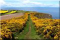 NT9562 : Coastal Path above Hawks' Ness by Chris Heaton