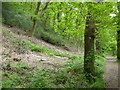 SS9128 : Timber clearance in Burridge Woods by David Smith