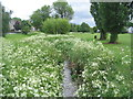 SP3079 : Cow parsley by the brook by E Gammie