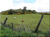 H5672 : Mullaghslin Glebe Townland by Kenneth  Allen