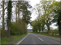SO4383 : Avenue of trees by Shrewsbury Road (A49) north of Craven Arms by David Smith