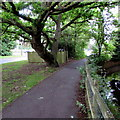 SU3521 : Knatchbull Close footpath, tree, electricity substation and stream, Romsey by Jaggery