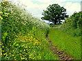 SO3742 : A short green lane by Jonathan Billinger