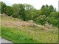 SH5841 : Hillside near Coed y Garth by Christine Johnstone