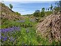 SD6612 : Bluebells by a moorland stream by Philip Platt