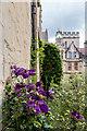SP5106 : Clematis in Garden, Brasenose College, Oxford by Christine Matthews