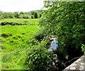 ST6333 : Riverside field, Castle Cary by Jaggery