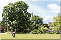 SP5105 : Green near Christ Church Cathedral, Oxford by Christine Matthews