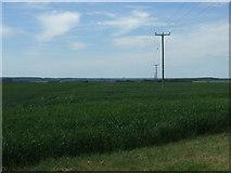 TL2657 : Crop field, Leycourt Farm by JThomas