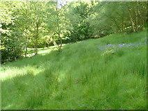SE0722 : Elland FP80 (E9), Greetland by Humphrey Bolton