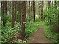 TQ3628 : Upper Eastlands Wood by Simon Carey