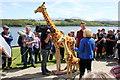SH5269 : A pair of Giraffes at Plas Newydd by Jeff Buck