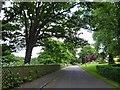 TF3286 : Crowtree Lane Louth by Steve  Fareham