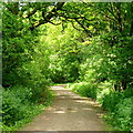 SO5513 : Public path near Bracelands camp site by Jonathan Billinger