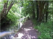 SO6302 : Shady path by Gill