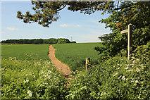 SK7964 : Footpath to Whiteley Plantation by Richard Croft