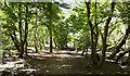 SD2708 : A path through the woods at Formby by Ian Greig